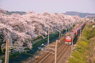 白石川堤一目千本桜とJR東北本線貨物列車の写真素材 [FYI02641649]