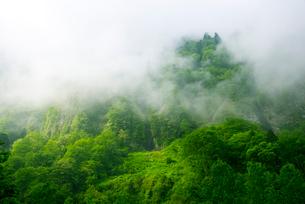 称名渓谷・霧に包まれる悪城の壁の写真素材 [FYI02641805]