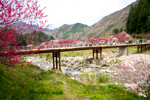 花桃の里と本谷川の清流の写真素材 [FYI02641865]