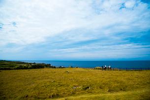 沖縄万座毛草原エメラルドグリーンの海の写真素材 [FYI02641923]