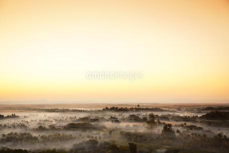 夕暮れの密林の写真素材 [FYI02641950]