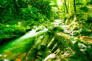 横川渓谷・新緑映す横川の清流と蛇石の写真素材 [FYI02641962]