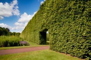 エディンバラの王立植物園の写真素材 [FYI02642082]