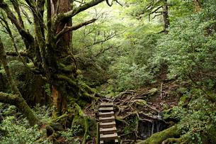 荒川林道のハイキングコースの写真素材 [FYI02642105]