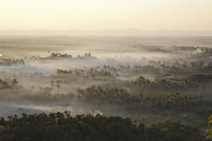 夕暮れの密林の写真素材 [FYI02642112]