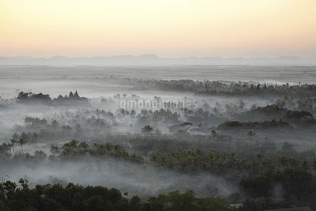 夕暮れの密林の写真素材 [FYI02642134]