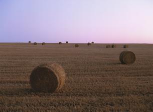 夕方の干草ロールの転がる麦畑の写真素材 [FYI02642170]