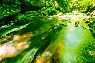 横川渓谷・新緑映す横川の清流と蛇石の写真素材 [FYI02642238]