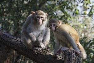 monkeysの写真素材 [FYI02642290]