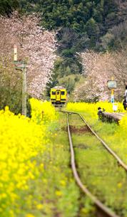 菜の花といすみ鉄道の写真素材 [FYI02642459]