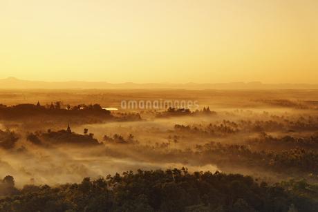 夕暮れの密林の写真素材 [FYI02642470]