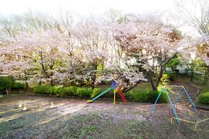 公園に散る桜の写真素材 [FYI02642555]