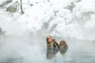 仲良しで温泉に入るニホンザルの写真素材 [FYI02642591]