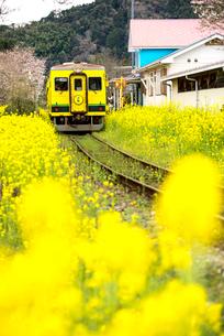 菜の花畑といすみ鉄道総元駅の写真素材 [FYI02642706]