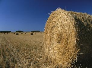 青空と干草ロールの転がる麦畑の写真素材 [FYI02642882]