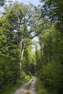road, forest, Kernen-Stetten, Baden-Wuerttembergの写真素材 [FYI02643232]