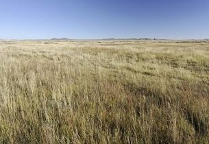 grassland, old Mongol capital, Yuan Shangdu or Xanaduの写真素材 [FYI02643240]