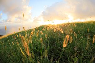 都井岬の丘の夕暮れの写真素材 [FYI02643270]