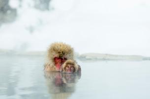 親子で温泉に入るニホンザルの写真素材 [FYI02643307]
