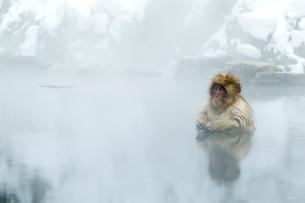 温泉に入る、もうすぐ1歳になる子ザルの写真素材 [FYI02643314]