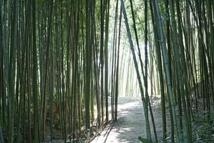 bamboo grove, road, Juknokwon, Bamboo Gardenの写真素材 [FYI02643318]