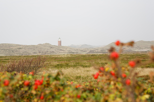 赤い花が咲く野原の写真素材 [FYI02643340]
