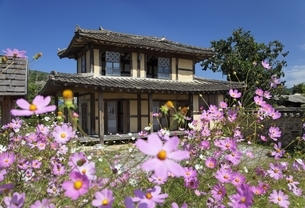 traditional house, cosmos flowersの写真素材 [FYI02643381]