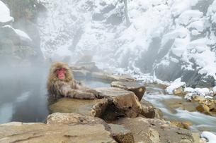 眠りながら温泉に入るニホンザルの写真素材 [FYI02643536]