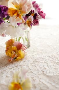 ガラスのコップに活けたパンジーの花の写真素材 [FYI02643569]