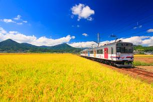 別所線の電車と稲穂実る田園の写真素材 [FYI02643714]