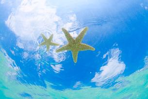 海に浮かんだ海星の写真素材 [FYI02643733]