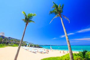 ヤシの木とビーチパラソルが並ぶビーチの写真素材 [FYI02643792]