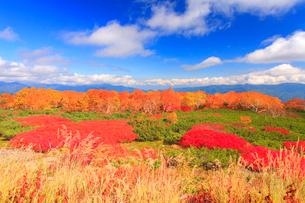 ナナカマドとダケカンバの紅葉と鉢盛山方向の山並みの写真素材 [FYI02643934]