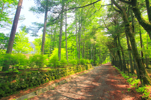 木もれ日射す新緑の新軽井沢の別荘地の道路の写真素材 [FYI02644260]