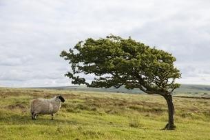 wind bent treeの写真素材 [FYI02644433]