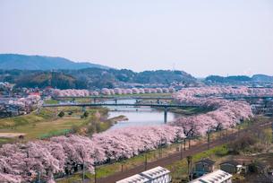 満開の白石川堤一目千本桜とJR東北本線の写真素材 [FYI02644591]