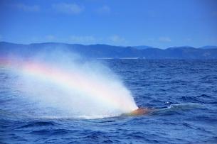 ザトウクジラのレインボーブロウの写真素材 [FYI02644729]