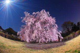 月夜のベニヤエシダレのライトアップと前山寺の本堂の写真素材 [FYI02644907]