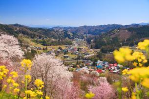 ソメイヨシノなどの桜と菜の花と浅間山方向の山並みの写真素材 [FYI02644916]