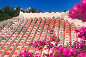 琉球赤瓦の屋根とブーゲンビリアとシーサーの写真素材 [FYI02644955]