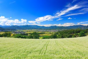 花咲く蕎麦畑と塩田平と青木三山などの山並みの写真素材 [FYI02645083]