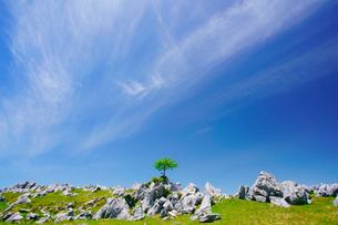 四国カルスト姫鶴牧場の石灰岩群と木立の写真素材 [FYI02645112]