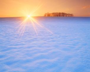 雪原と木立と朝日の写真素材 [FYI02645208]