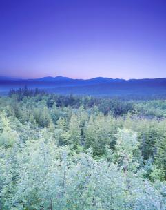 朝の針広混交林と大雪山の写真素材 [FYI02645263]
