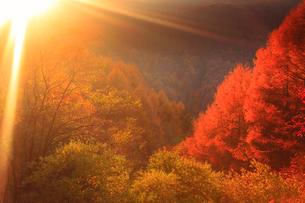 ゼロ磁場の水場付近の紅葉の樹林と夕日の光芒の写真素材 [FYI02645275]