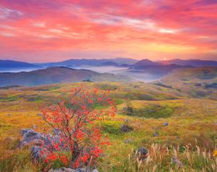 カルスト台地と柿の木と朝焼けと朝日と権現山などの山並みの写真素材 [FYI02645301]