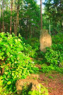 夕日が射す塩田城跡の碑の写真素材 [FYI02645486]