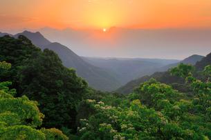 ヤマギリの花咲く新緑の原生林と明星岳と朝日の写真素材 [FYI02645610]