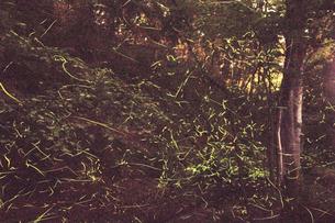 ホタルの光の写真素材 [FYI02645763]
