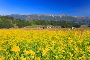 菜の花畑と鍋倉山の写真素材 [FYI02645859]